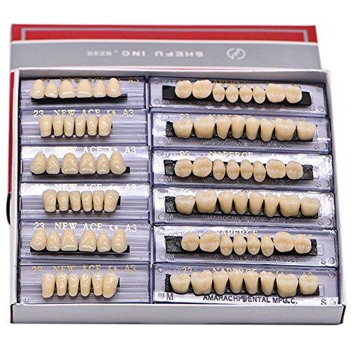 Angzhili Dental Synthetic Acrylic Resin False Teeth for Halloween Horror Teeth Denture Teeth Sets Shade A3 Upper And Lower Acrylic Teeth Sets168pcs